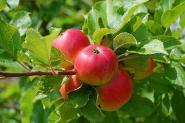 Fête de la pomme à Leuilly-sous-Coucy