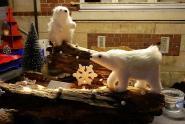 Des ours polaires de passage à Crécy-au-Mont