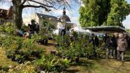 Quelques plantes et arbustes pour faire honneur au printemps