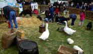 Les enfants ont fait connaissance avec les animaux de la ferme